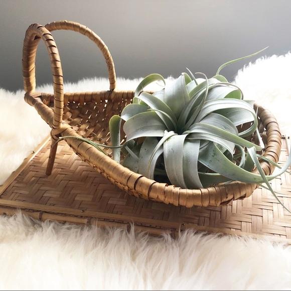 Unique Wicker Basket Air Plant Holder Display